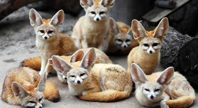 природа Запитання-цікавинка: Як звуть цих тварин?