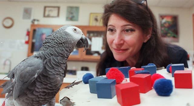 природа Запитання-цікавинка: Як звали папугу, який отримав популярність через експерименти доктора наук А. Пепперберг?