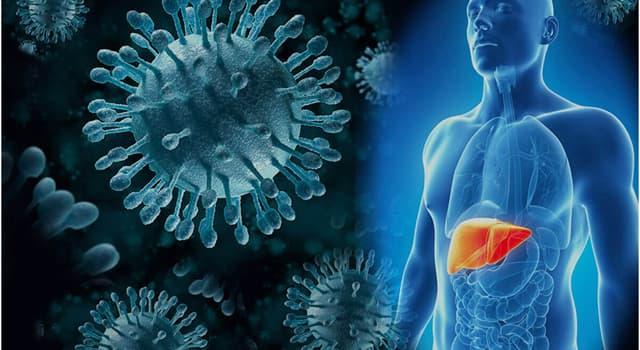 Наука Запитання-цікавинка: Хто відкрив поверхневий антиген гепатиту В в 1964 році?