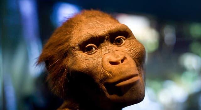Наука Запитання-цікавинка: В якій країні був знайдений скелет австралопітека афарского, названий ім'ям Люсі?