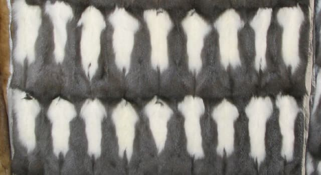 Culture Trivia Question: Vair is fur obtained from which animal?