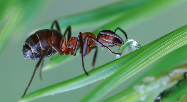 Nature Trivia Question: What do ants feed on?