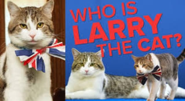 Society Trivia Question: What is the title of the official resident cat of the Prime Minister of the UK at 10 Downing Street?
