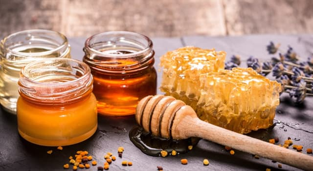 Science Trivia Question: Which of these can be treated by honey?