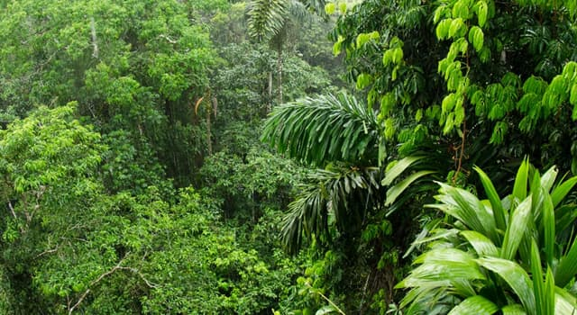 Nature Trivia Question: Which exotic looking animal listed can't be found in the Amazon?