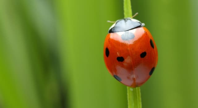Nature Trivia Question: Which of these is the last stage an insect attains during its metamorphosis?