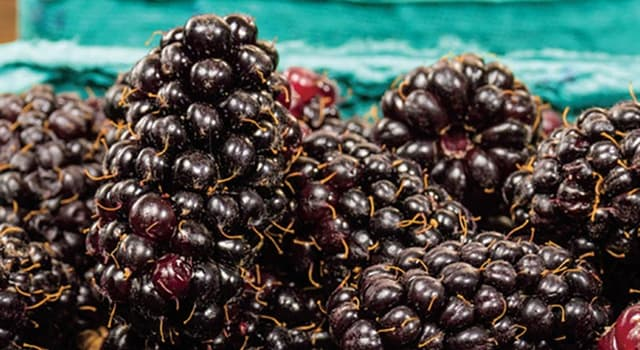 Science Trivia Question: Which type of berry is this?