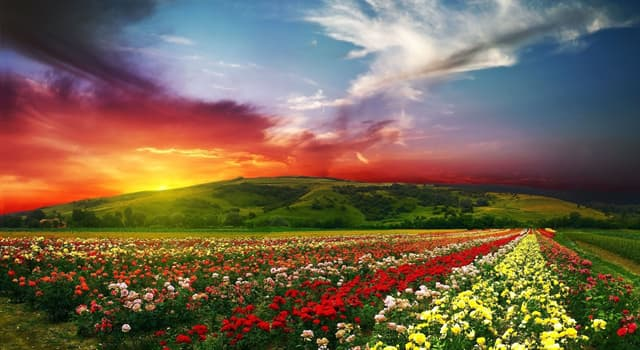 Nature Trivia Question: By which name are flowering plants also known?