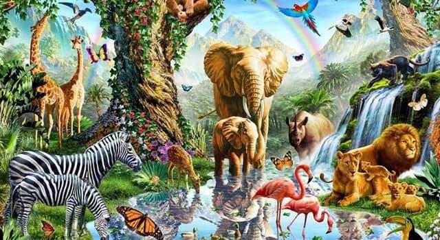 природа Запитання-цікавинка: Які з перерахованих живих організмів належить до живим викопним?