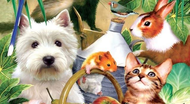 Фільми та серіали Запитання-цікавинка: Які тварини стали головними героями в казці «Бременські музиканти» братів Грімм?