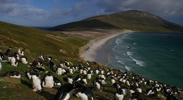 Географія Запитання-цікавинка: Який архіпелаг аргентинці називають Мальвінськими островами?