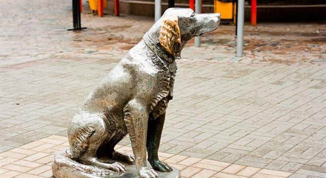 Культура Запитання-цікавинка: В якому місті знаходиться цей пам'ятник Білому Биму?
