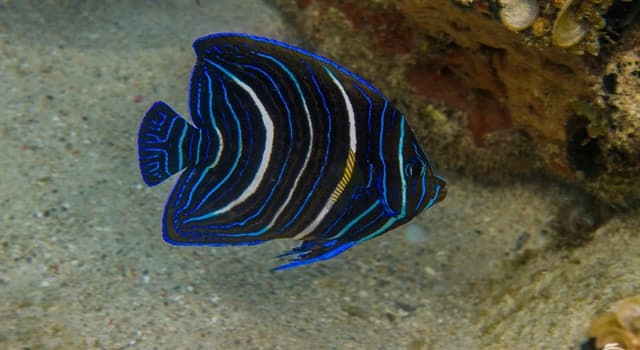 Nature Trivia Question: What is the name of this fish?