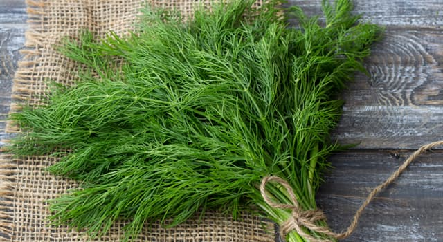 Nature Trivia Question: What is this herb?