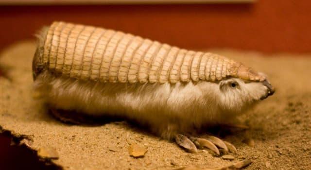 Naturaleza Pregunta Trivia: ¿Cuál es el animal de la imagen?
