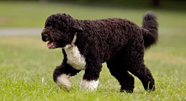 Nature Trivia Question: Which dog breed is this?