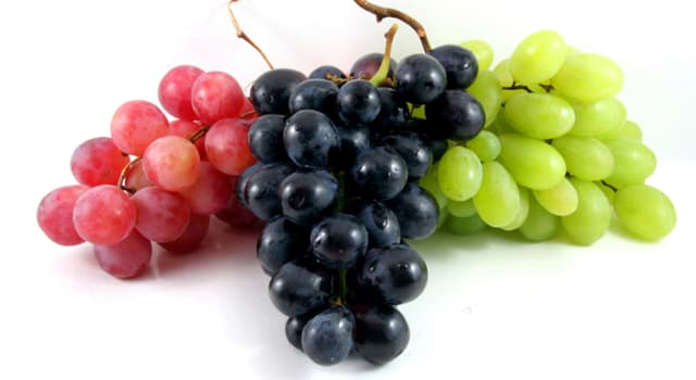 Nature Trivia Question: Which of these is not a type of grape?