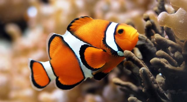 Nature Trivia Question: Which organ helps most aquatic organisms to extract dissolved oxygen from water?