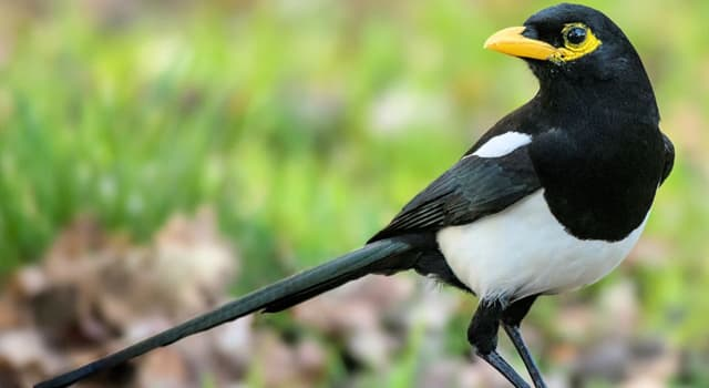 Nature Trivia Question: Which type of bird is this called?