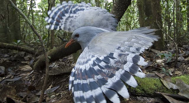 Nature Trivia Question: Which bird is this?