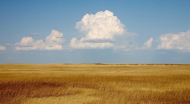 природа Запитання-цікавинка: Як називається північноамериканська форма степу, вегетаційна зона на Середньому Заході США і Канади?