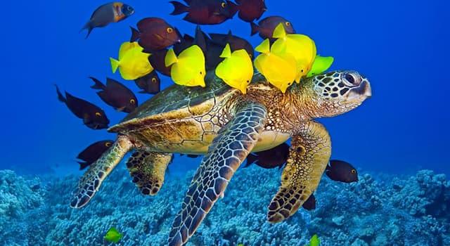 природа Запитання-цікавинка: Які риби живуть в морських водах?