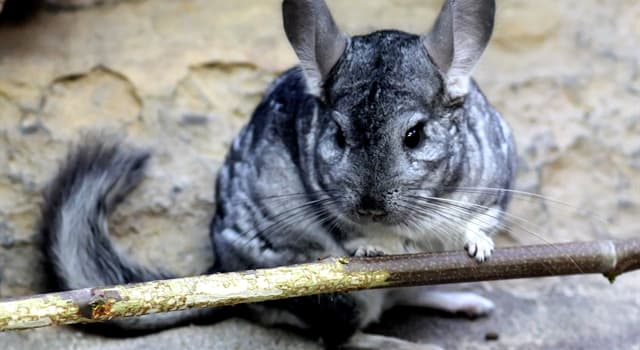 природа Запитання-цікавинка: Яка тварина зображено на фото?
