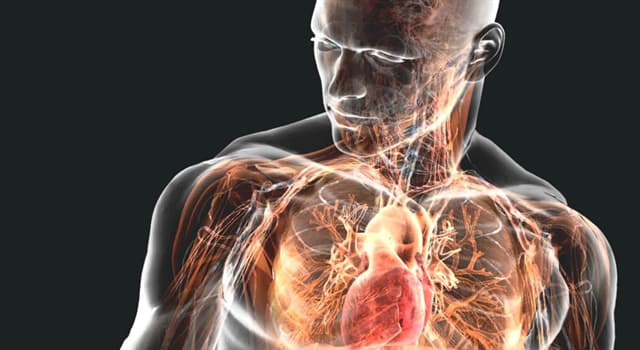 Наука Запитання-цікавинка: Що формується при розпаді глюкози в організмі людини?