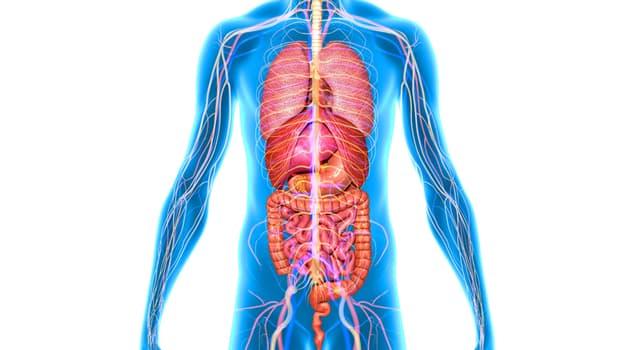 Наука Запитання-цікавинка: Що забезпечує передачу сигналів між головним і спинним мозком і органами?