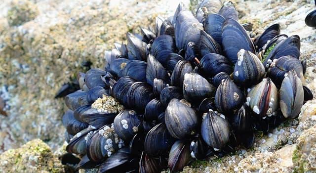 природа Запитання-цікавинка: Що утворюється в раковинах деяких молюсків?