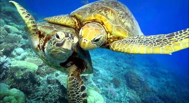 природа Запитання-цікавинка: Де морські черепахи відкладають яйця?