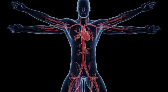 Наука Запитання-цікавинка: Де в організмі людини знаходиться сіра речовина?