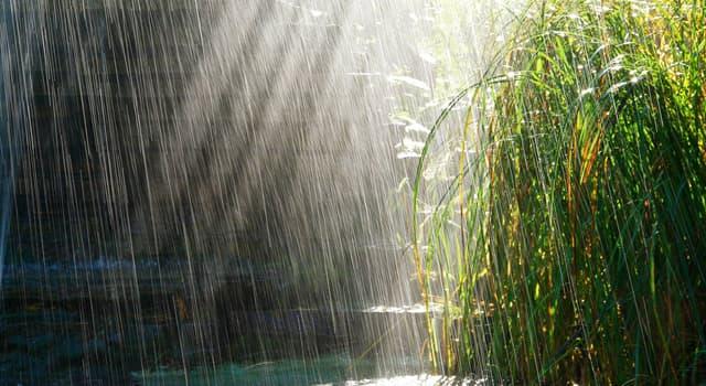 природа Запитання-цікавинка: Як зазвичай називають дощ, що йде при світлі сонця?