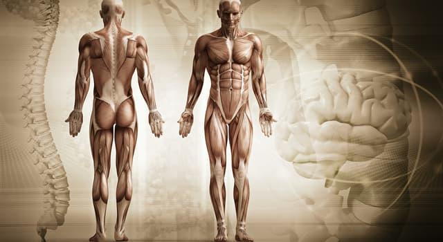 Наука Запитання-цікавинка: Яка частина тіла складається з кореня, спинки, верхівки і крил?