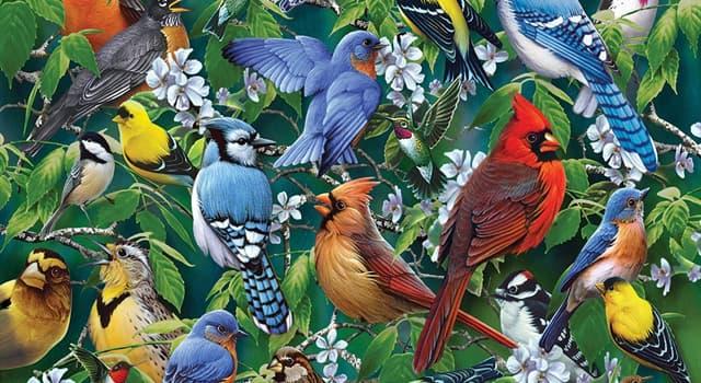 природа Запитання-цікавинка: Які птахи є головним чином зернояднимі?