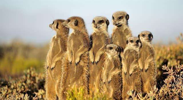 природа Запитання-цікавинка: Які тварини зображені на фото?