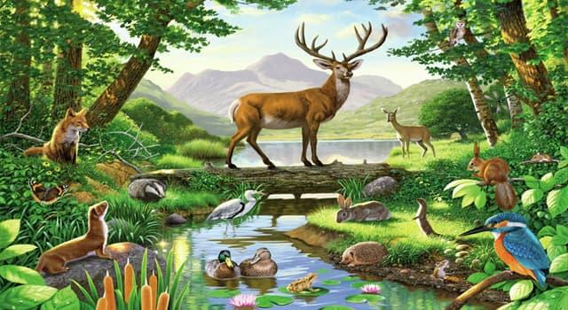 природа Запитання-цікавинка: Яких тварин називають м'ясоїдними?