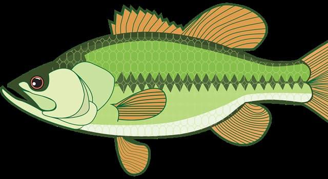 природа Запитання-цікавинка: Яким способом в основному пересуваються риби?