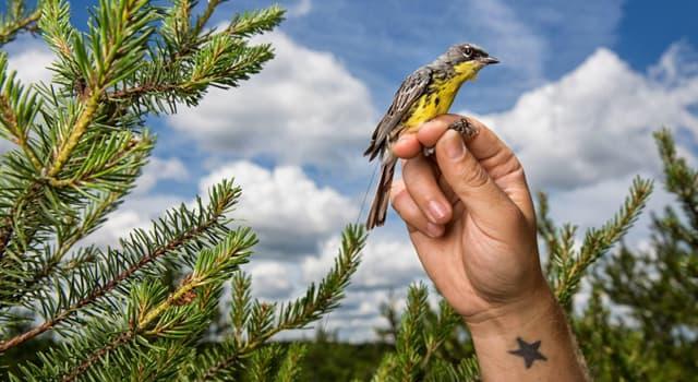 Наука Запитання-цікавинка: Який розділ зоології вивчає птахів?