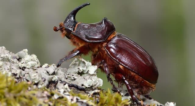 природа Запитання-цікавинка: Який жук зображений на фото?