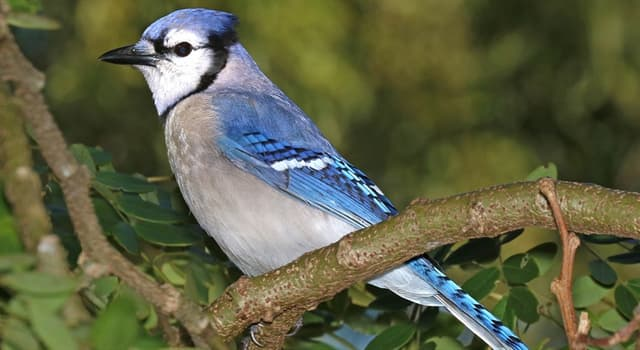 Nature Trivia Question: What type of bird is this?