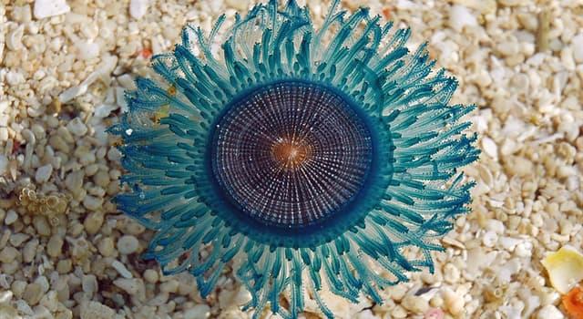 Naturaleza Pregunta Trivia: ¿Qué organismo marino hay en la imagen?