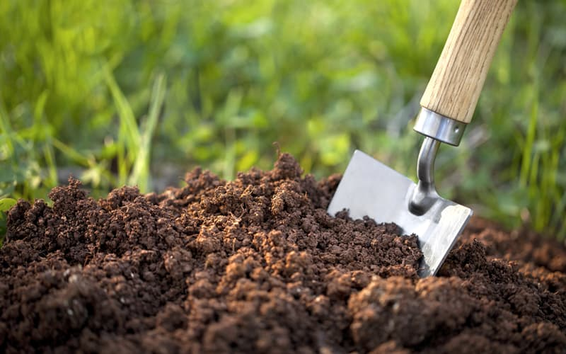 Nature Trivia Question: Which of these support the process of oxygenation, moistening and mixing soil?