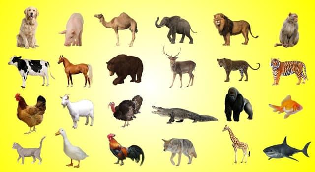 природа Запитання-цікавинка: До якого класу тварин відноситься удод?