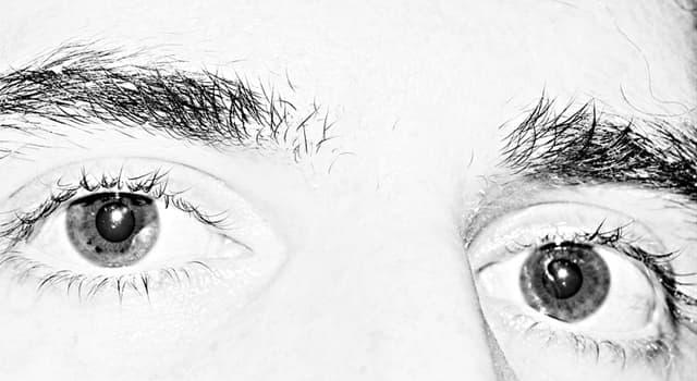 """Kultura Pytanie-Ciekawostka: Kto powiedział: """"Oko za oko uczyni tylko cały świat ślepym""""?"""
