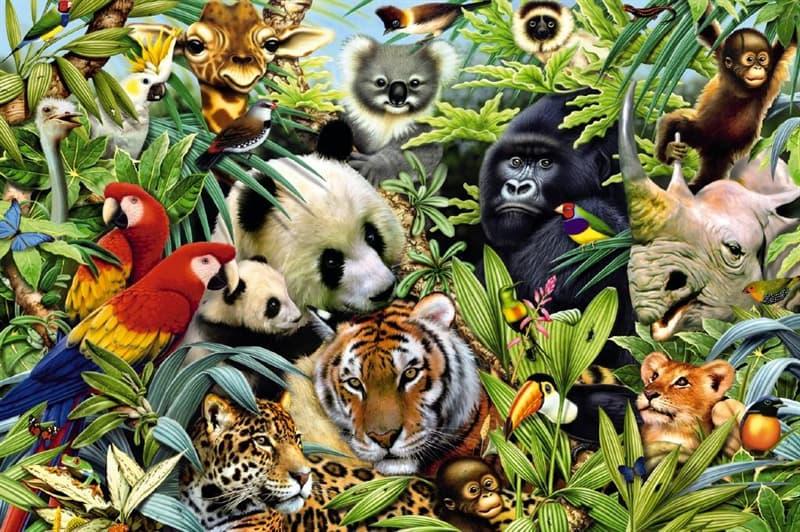 Natur Wissensfrage: Welches dieser Tiere schläft mit einem geöffneten Auge?