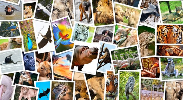 Naturaleza Pregunta Trivia: ¿Qué tipo de animal es la amazona de frente azul?