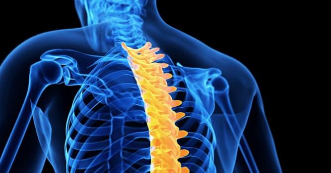 nauka Pytanie-Ciekawostka: Co z tego jest techniką chirurgiczną wykorzystywaną do zespolenia dwóch lub więcej kręgów?