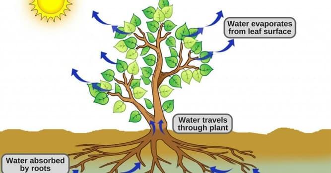 natura Pytanie-Ciekawostka: Jak nazywa się proces wchłaniania płynu roślinami przez korzenie?