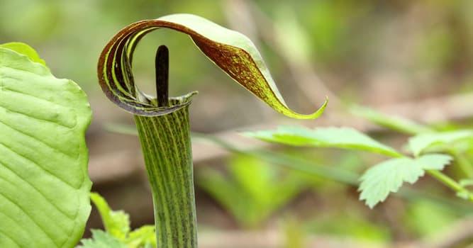 natura Pytanie-Ciekawostka: Jak potocznie nazywana jest ta roślina?